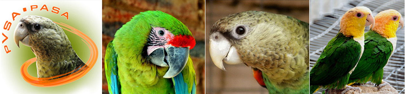 Parrot Breeders Association of South Africa | PASA